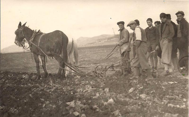 תמונה של שריד סוף שנות השלושים