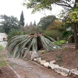 תמונה של עץ הדקל מאחרי הבית של מאור פרסאי.