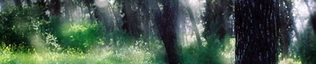 תמונה של יער שריד