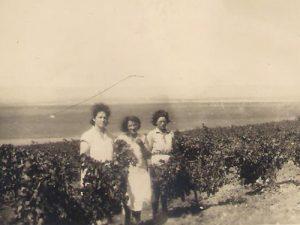 תמונה של מבט לכרם - זושה פומרנץ ופרידל שליסר