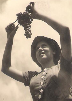 תמונה של בקה כץ בוצרת ענבים