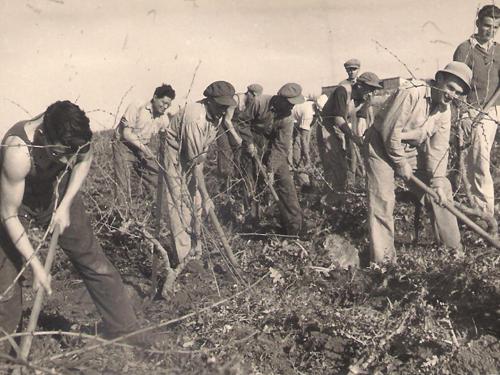 תמונה של מעשבים בין הגפנים - 1940
