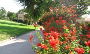 תמונה של פרחים-כתומים