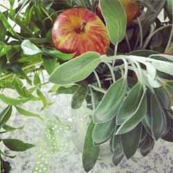 תמונה של תפוח