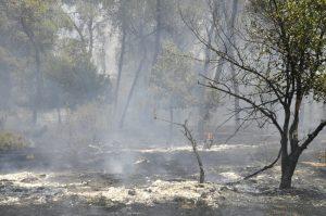 תמונה של שרפה החורשת המשקפיים