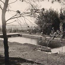 תמונה של הבריכה בשריד 1948