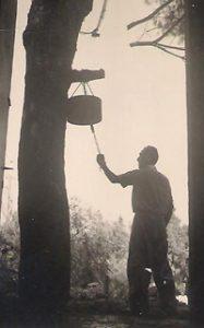 תמונה של הפעמון הקיבוץ