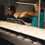 תמונה של יעל מרון ואסתי שטיינברג במחסן ביצים