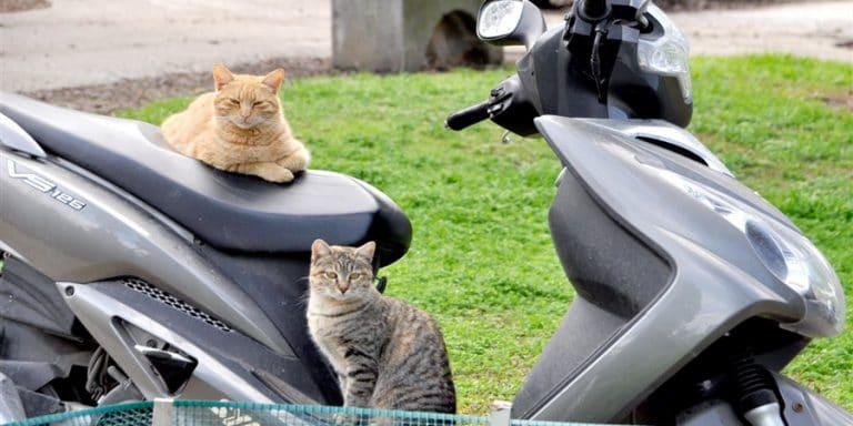 תמונה של חתולי רחוב בשריד