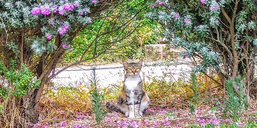 תמונה של חתול בקיבוץ שריד