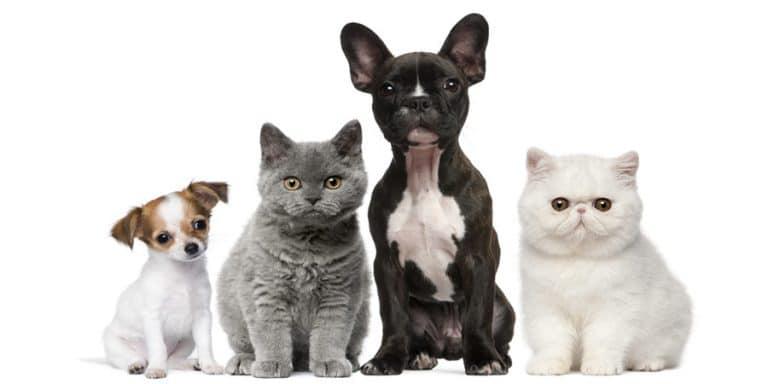 תמונה של חתולים וכלבים