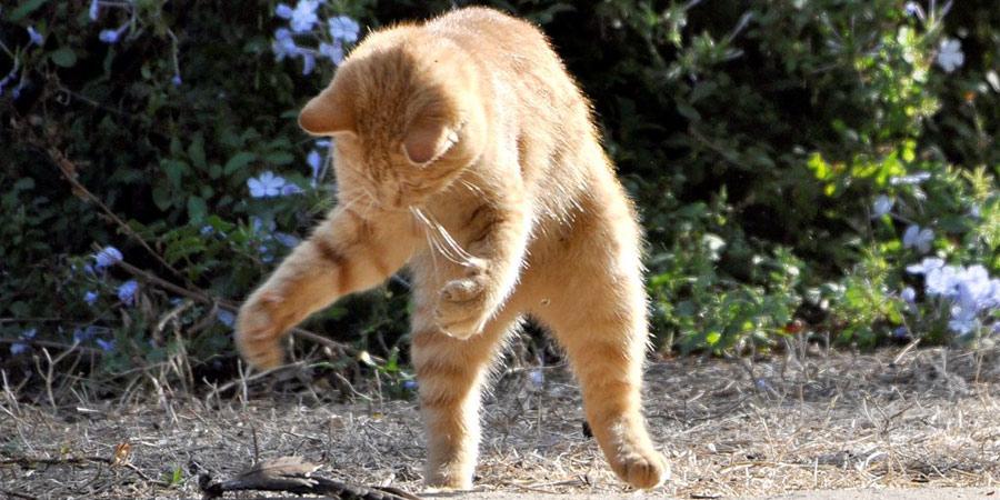 החתול המרקד צילום יאיר חרמוני