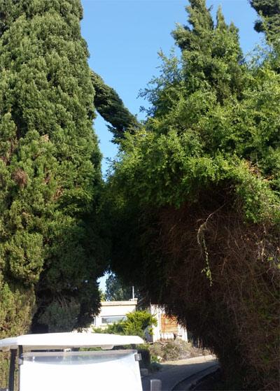 תמונה של עץ שנפל בבית ספר שגיא