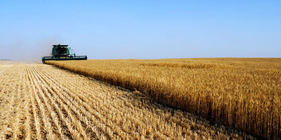 תמונה של קומביין בשדה