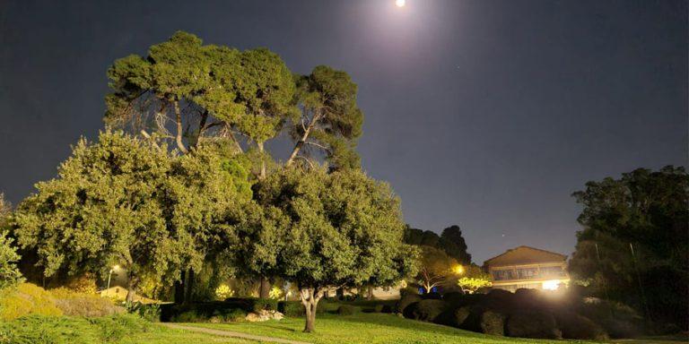 תמונה של שריד בלילה